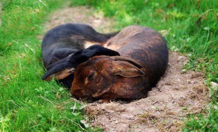 Allt om kaniners välfärd