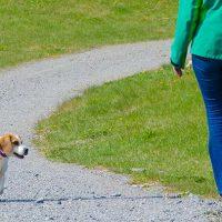 kurs, övning på hundmöte