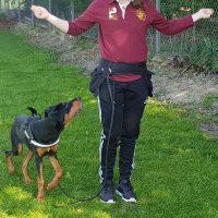 Kursbild, hund som tränar med sin matte
