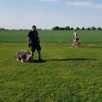 Kursbild, hundar med sina ägare mitt upp i träning