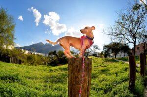 Liten hund står fokuserad på en stubbe