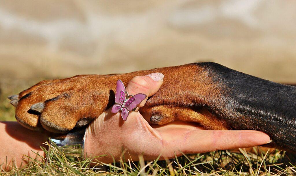 Hanteringsträning för hundar