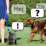 Hundspråk för alla tillfällen