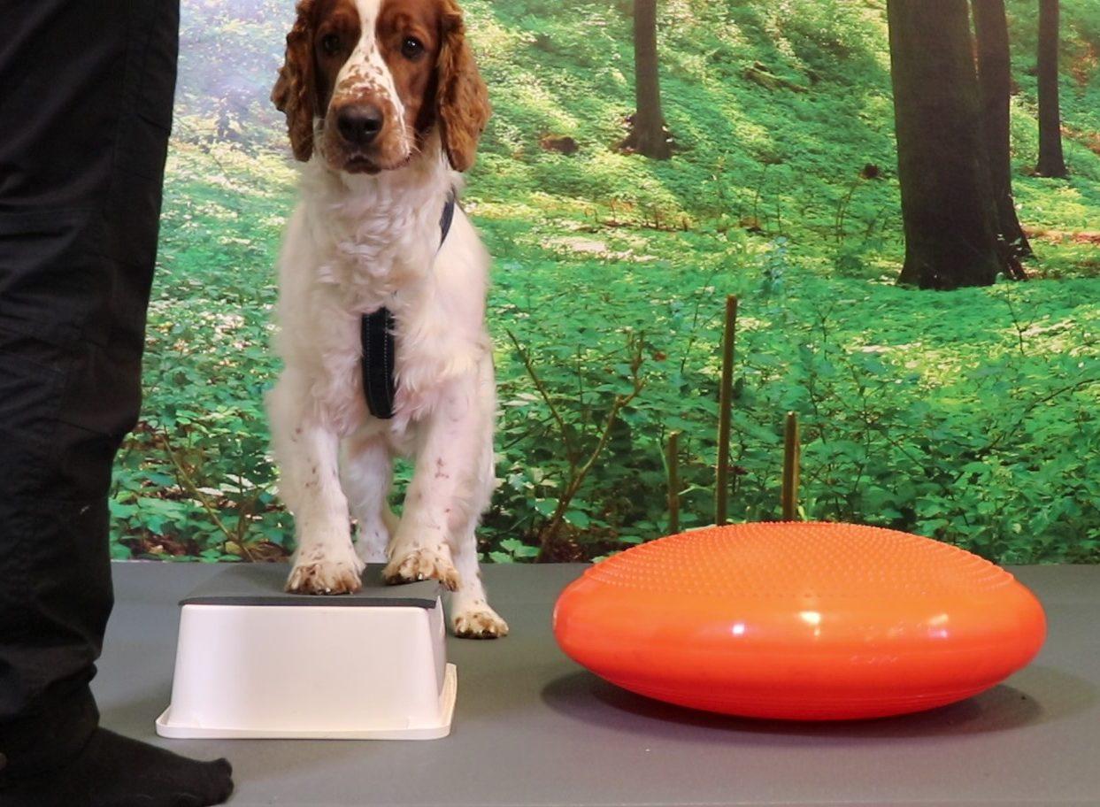 Bakdelskontroll hund online