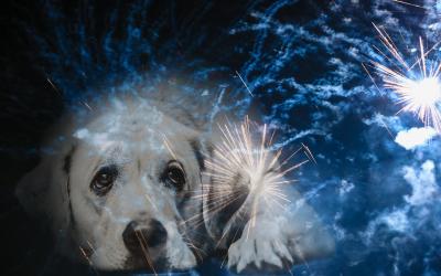 Hjälp & förstå hundar med fyrverkerirädsla